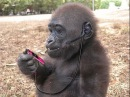Смешные видео про животных. Улетные животные смешно до слез. Смешные животные до слез.