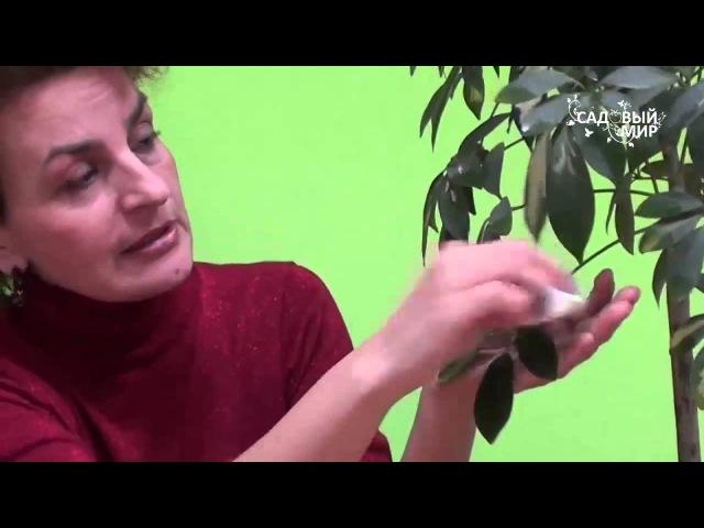 Как помочь комнатным цветам зимой Сайт Садовый мир