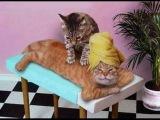 Кошки делают массаж. Смешные животные