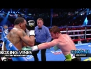 Boxing Vines Canelo vs. Kirkland 2015 by CHAPLIN