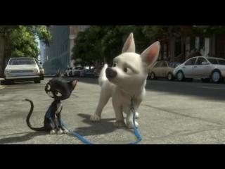 Смешной кадр из мультика Вольт - YouTube