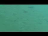 Рыбы гоняются за лазерной указкой