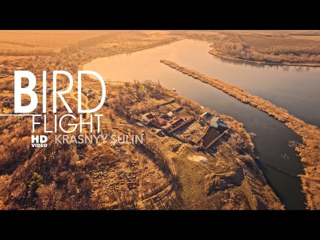 Полет птицы Красный Сулин BIRD FLIGHT Krasnyy Sulin