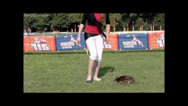 Vanda Gregorová Ernisa Orlen (Chihuahua) - DogDancing Exhibition (Dogfrisbee Championship 2011)
