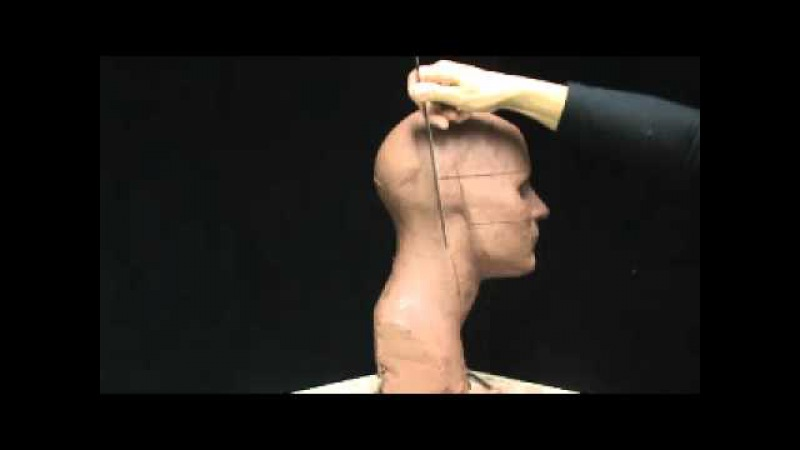 Proportions of the face and head. Sculpting a head in clay. Basic facial proportions.