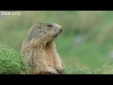 Funny Talking Animals - Walk On The Wild Side Preview - BBC One