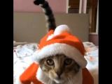 Кот в новогоднем смешном костюме