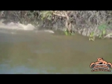 Ягуар и крокодил) [360p]