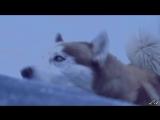 Клип из к-ф_Белый плен_Gregorian