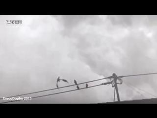 Странные существа и необъяснимые явления снятые на видео.