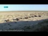 Халық даналығы | Мөңке бидің айтқаны (жаңа ролик)