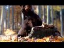 Autumn Dog Tricks 2015 - border collie MALI kelpie NILLA