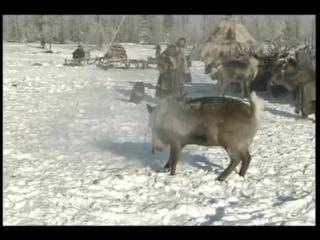 Не навреди! (д.ф. о Крайнем Севере России, его людях, природе и технологиях)