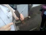 Защёлка на клетку для кроликов Автор А Салов