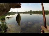 Ловля карася на фидер.Рыбалка ONLINE