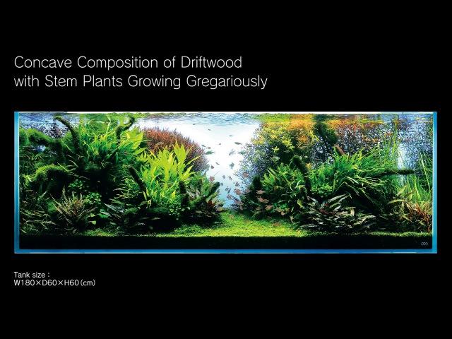 [ADAview] 180cm Aquarium Layout Concave Composition with Driftwood