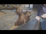 Симпатичной обезьянке показали фокус / Monkey Sees A Magic Trick