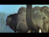 Zoo Brazil feat. Rasmus Kellerman - There Is Hope
