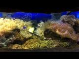 Сочи,океанариум в Ривьера парке