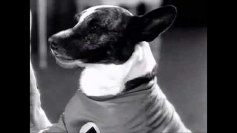 NOTHING CAN STOP ME NOW Dogville Comedies, Episode 2 College Hounds, 1929