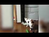 Почему кошки боятся огурцов? ))