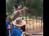 покатушки на страусе