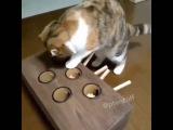 Кот играет в