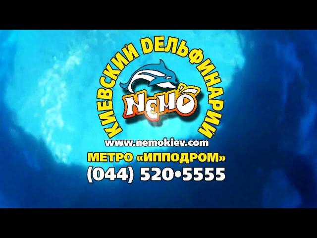 Презентация дельфинария Немо 1 мин 45 сек