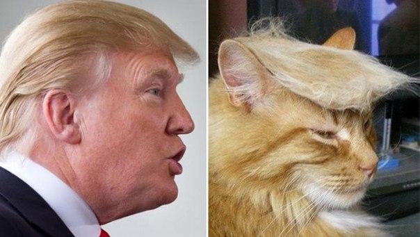 Секретная плантация причёсок Дональда Трампа ВИДЕО