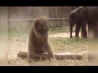 Видео Подборка Приколов  с Животными 4 Кошки,Собаки  Смешные Животные 2015