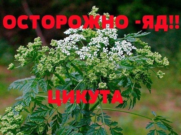 ORGns_kj-8g.jpg