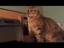 Коты исподтишка