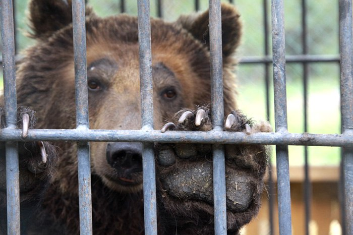 В Ростовской области ветеринарные инспекторы задержали грузовик с цирковыми животными без документов