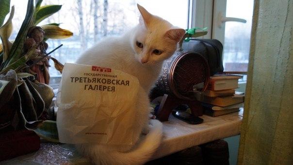 В эти трудные времена всем нам не хватает одного: котов. Особенно остро это ощущаешь сегодня - во всемирный день кошек