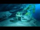 Шевели ластами (2010) Онлайн фильмы vide_video