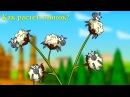 Профессор Почемушкин - Познавательный мультфильм для детей – Как растет хлопок