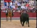 Мерлин - лошадь торреро