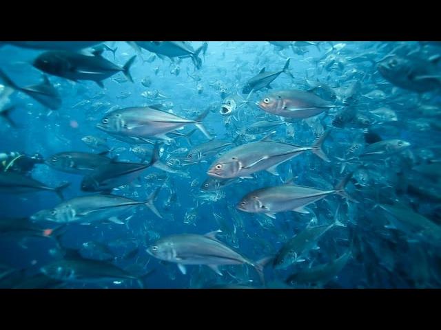 Underwater Reel Kevin Mannens 2016