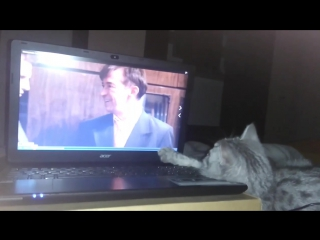 кошка Нора смотрит сомной кино <<Молодежка>>