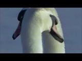 Владимир Захаров - Два Белых Лебедя