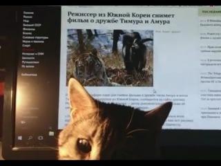 Кот Барсик смотрит видео про козла Амура и тигра Тимура