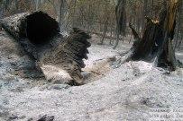 05 августа 2010 - Последствия пожара в лесу Тольятти