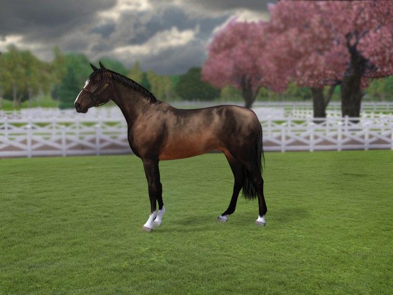 Регистрация лошадей в RHF 2 - Страница 37 _O7grgPYers