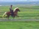 Super Tölt on an Icelandic Horse