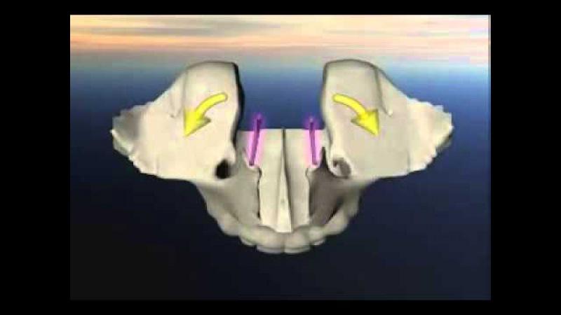 Краниосакральный ритм верхней челюсти. Вид сверху. Остеопатия. Краниосакральная терапия.
