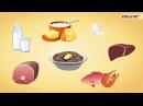 Витамины и их роль в организме человека