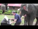 Слон помогает пианисту играть блюз / 12 Bar Blues - Piano Duet with Peter the Elephant - Thailand