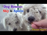 Sky &amp Apollo rescued while the Endeavour space shuttle flies over us - a MUST SEE. Please share.