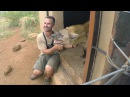 Do Hyenas Laugh??   The Lion Whisperer