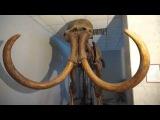 Палеорасследования кладбище мамонтов  Волчья грива
